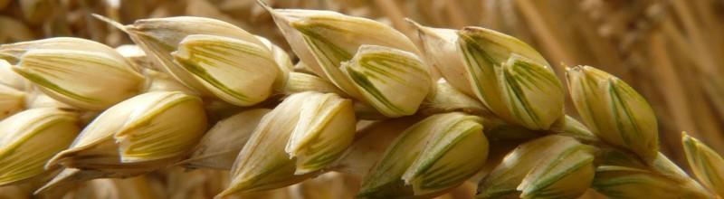 grãos e cereais